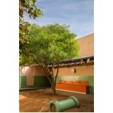 colégio infantil com ensino fundamental particular valor Guará